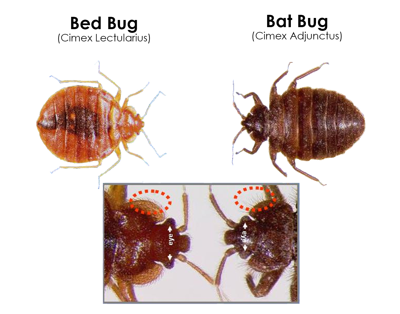 exterminators sample your bug extreme bed control pest solution heat banner